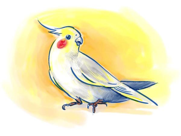 Middle img bird07 bak